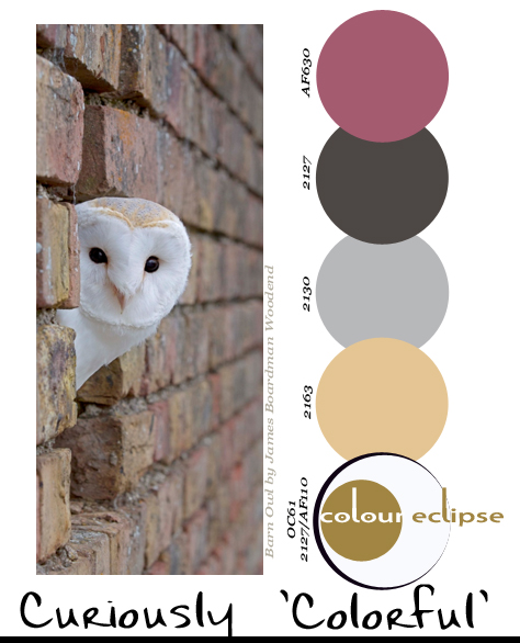 curiously-'colorful'-paint-palette, paint palettes, color palettes, color schemes, benjamin moore color combinations, white barn owl peeking out from brick wall