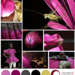 magenta and black mood board