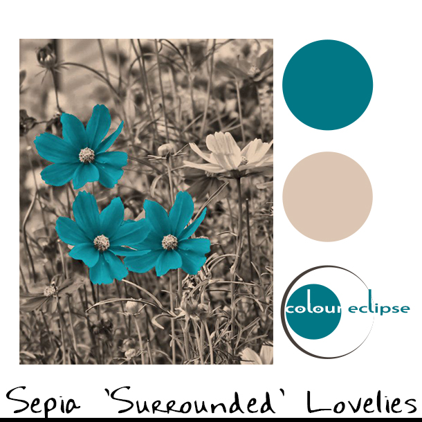 sepia and teal flower photograph