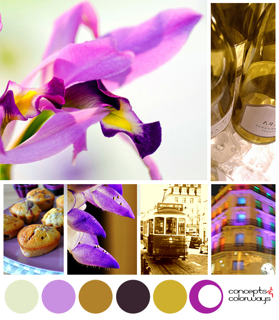 purple and gold mood board