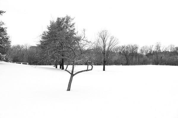 snowcovered trees steel gray and white