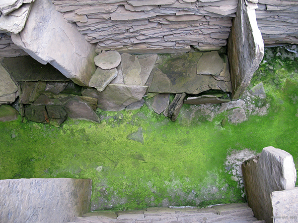 stone ruins with bright green moss floor