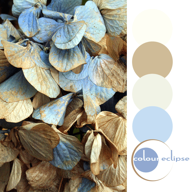decaying flower petals with color palette