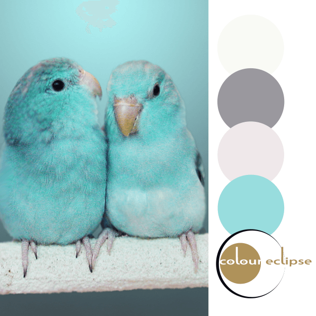 mint green parrotlet babies with color palette