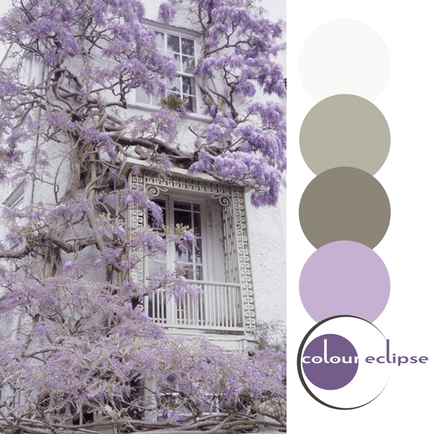 wisteria against white brick wall with color palette