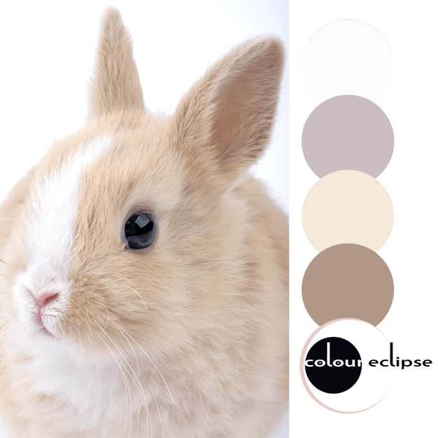 light brown and white bunny inspired color palette