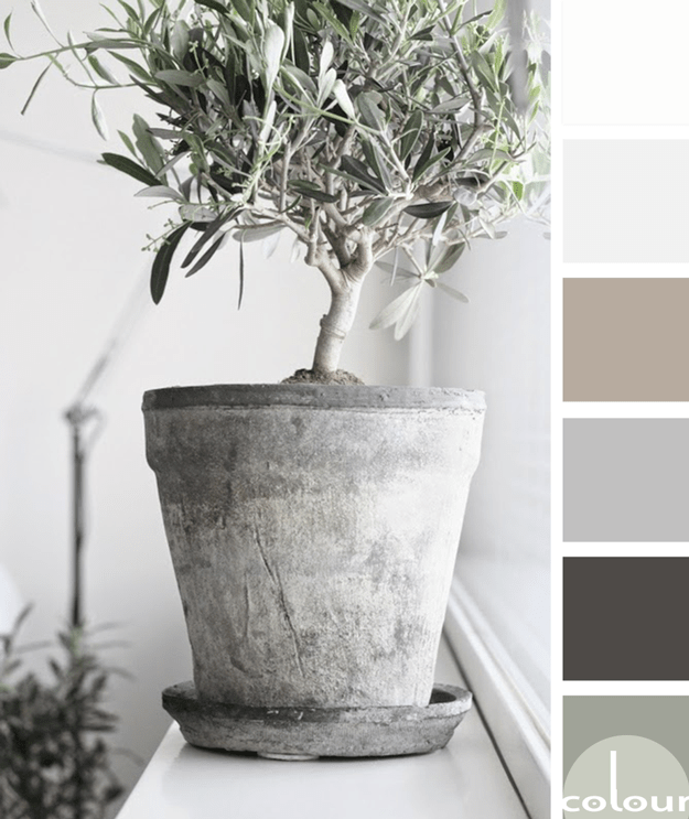 olive tree in concrete pot color palette