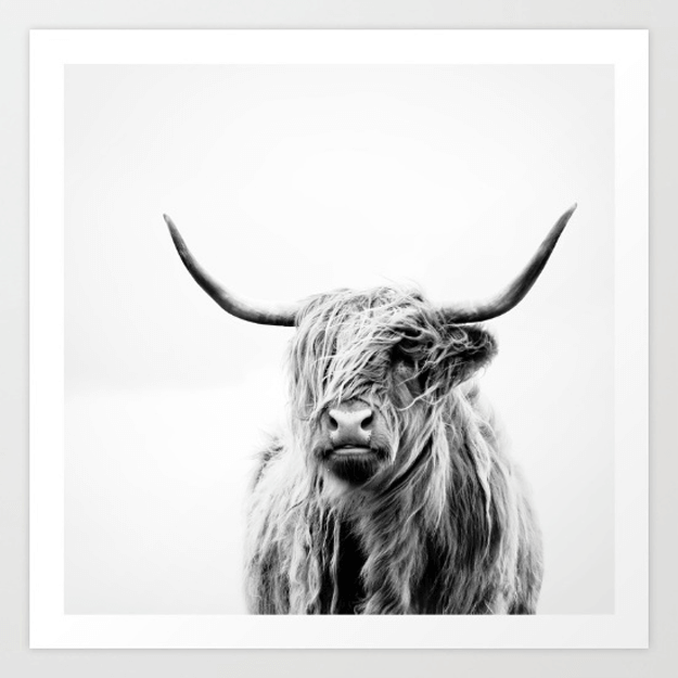 black and white photo of highland cow
