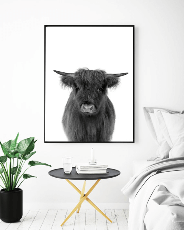 black and white highland cow photograph