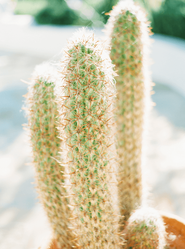 cactus closeup with green undertones