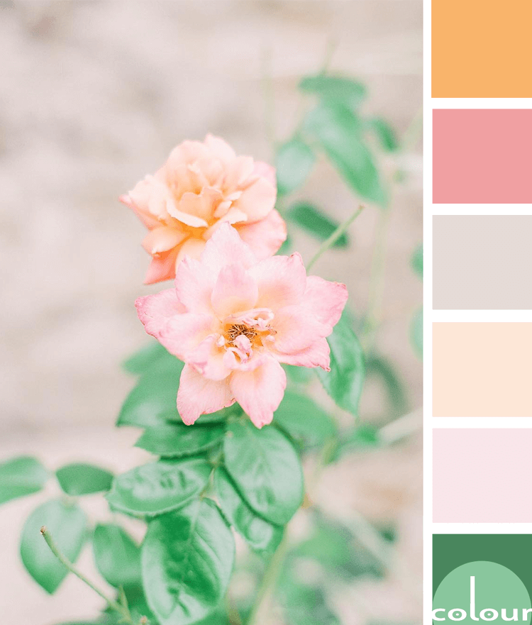 color palette, peach color, blush pink, lush green, light taupe, pale pink, soft orange, mint green, flower photography, flower images, beautiful flowers, peach flowers, pink flowers, green foliage